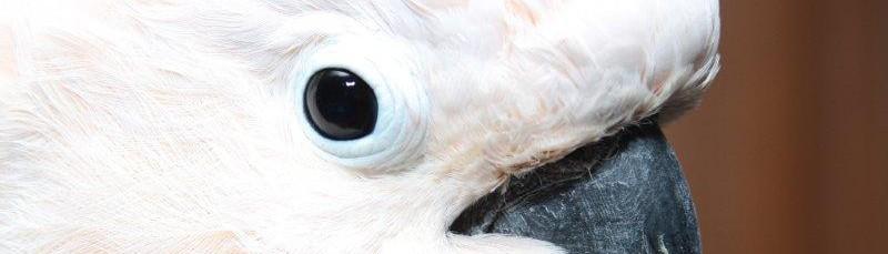 Birdline Canada Ltd